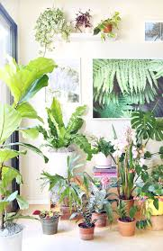 best indoor house plant 18 most beautiful indoor plants u0026 5 easy care tips a piece