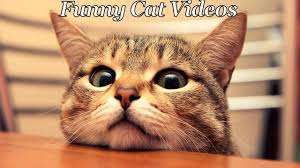 Funniest Challenge Try Not To Laugh Challenge Cats Compilation Funniest Cat