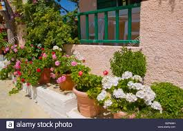 plants in pots outside traditional village house in myrtos on the