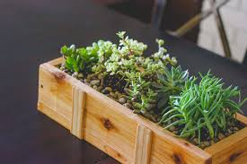 diy succulent succulent planter diy for under 10 weed em reap