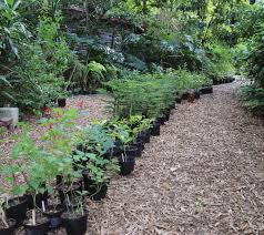 starting a plant nursery business homewood nursery