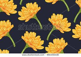 Calendula Flowers Free Calendula Flowers Vector Download Free Vector Art Stock