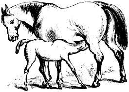 electronic field trip horse farm uk college