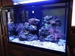 Octopus Home Octopus Page 2 Invertebrate Forum Nano Reef Com Community