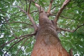 tree up catheys tree service tree removal