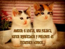 imagenes con frases de amor super tiernas imágenes para descargar gratis de gatitos con frases tiernas para
