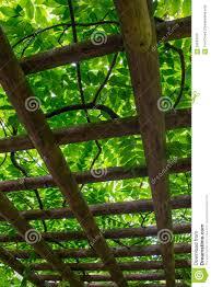 japanese garden trellis stock photo image 59943070