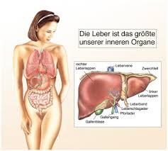 leberschwäche symptome lebererkrankungen anzeichen symptome ursachen behandlung