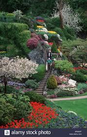 butchart gardens spring tulip display stock photos u0026 butchart