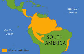 south america map rainforest sloth forest climate change