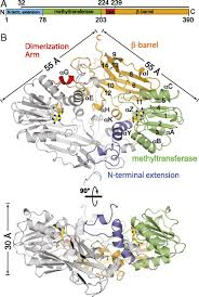 The Domain Map A Glutamate Aspartate Switch Controls Product Specificity In A