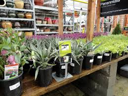 Fake Plants Home Depot Danger Garden Doin U0027 Double Takes U2026