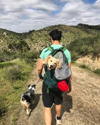 hiking with australian shepherds he