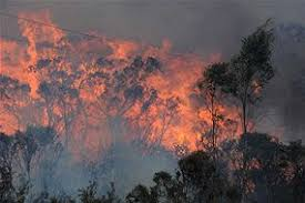 how do you identify what started a bushfire ask an expert abc