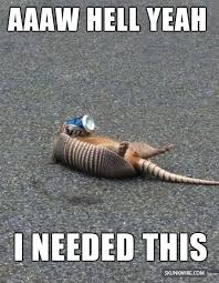 Armadillo Meme - see more cute and funny animal pictures at www skunkwire com