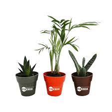 plante d駱olluante bureau oui les plantes de bureau publicitaires font du bien aux salariés