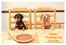 happy happy thanksgiving friends rufusontheweb