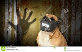 halloween back drop dog in a scary teeth mask with digital backdrop stock photo