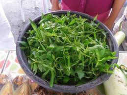 224 best vegetable plants images on pinterest mobile app