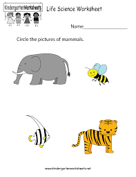 free kindergarten science worksheets learning the basics of science