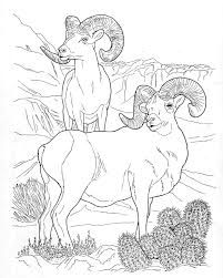 wild animals pictures for colouring