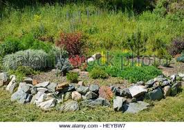 Summer Garden Plants - alpine garden plants in bloom greater sudbury ontario canada