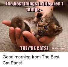 Good Cat Meme - 25 best memes about best cat best cat memes