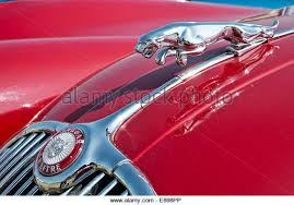 jaguar ornament stock photos jaguar ornament stock