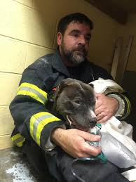 dozens of cats dogs perish in fire at sweetpea friends of rutland