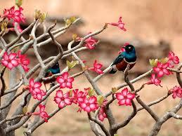 wallpaper birds and flowers wallpapersafari