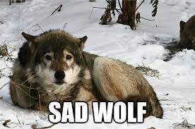 Wolf Memes - sad wolf memes wolf best of the funny meme