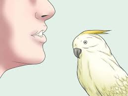 100 what do backyard birds eat backyard birds latham new