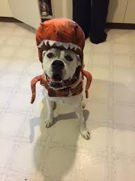 in costumes 92 best howloween images on boxers scary