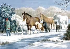 christmas cards sale all together christmas cards on sale lincolnshire animal welfare