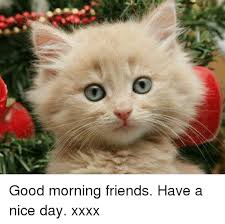 Have A Nice Day Meme - u good morning friends have a nice day xxxx meme on sizzle