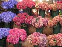 Wholesale Flowers Market Manila New York Wholesale Flower Market Flowers