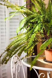 benefits houseplants why you more houseplants