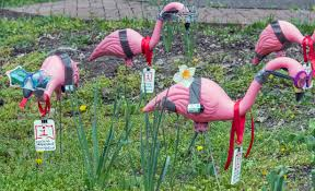 pink flamingos lawn ornaments ashland daily photo