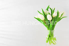 white tulips background with bouquet of white tulips by alina kholopova