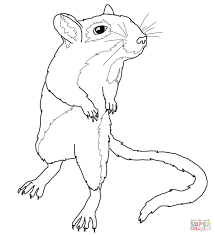 gerbil coloring pages coloring page