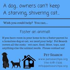 volunteering fostering pet search animal rescue and placement