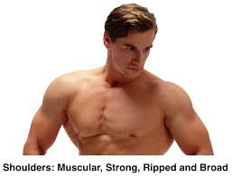 8 best shoulder exercises for hardgainers to pack mass