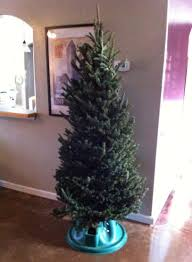Christmas Tree by How To Get A 5 Christmas Tree And How To Take Care Of It