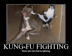 Internet Tough Guy Meme - 25 funny dog and cat demotivational signs cattime