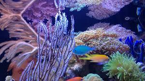 marine paradise my mini coral reef