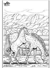 wild horse coloring pages to print horse print out coloring pages