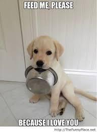 Feed Me Meme - feed me please because i love you funny hungry dog meme