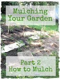 20 best mulch images on pinterest garden gardening tips and