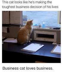 Business Cat Memes - 25 best memes about business cat business cat memes