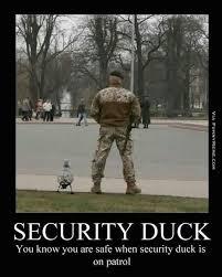 Duck Meme - duck meme center meme 6 wattpad